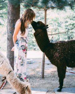 Alpaca che gioca con una donna: foto di Taryn Elliott da Pexels